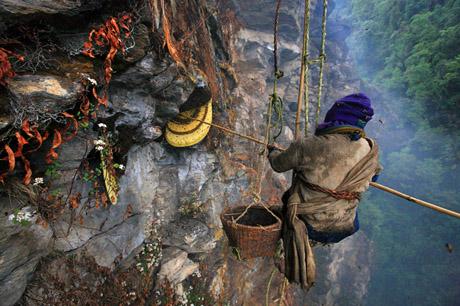 Bee-Nepal-063.jpg