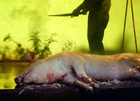 Bumbutz-umbre-porc.jpg